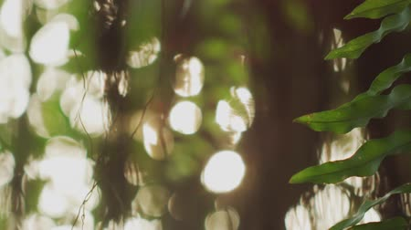Nature background. beautiful sunshine through the tree in Bangkok, Thailand. shot with RED Camera