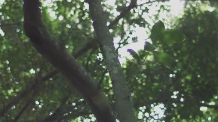 dolly shot in the forest, Bangkok, Thailand. shot with RED Camera. Dostupné videozáznamy