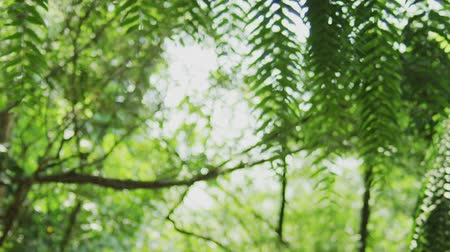 focus shot in the forest, Bangkok, Thailand. shot with RED Camera. Dostupné videozáznamy