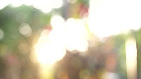 Early morning in Bangkok, Thailand. Nature background. sunshine through leaves. Blurred abstract bokeh with sun flare.