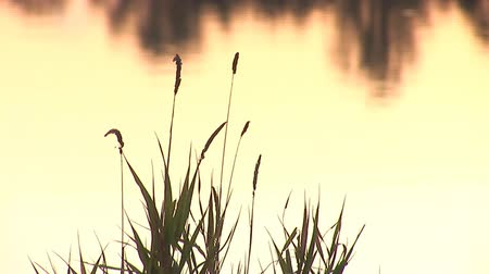 superfície : surface of the water at sunset Stock Footage