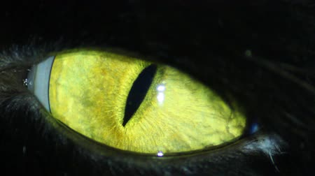 olhos verdes : Black Cats Eye Stock Footage