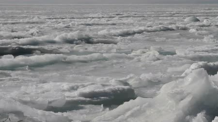 raf : cracks in the sea ice on the shelf