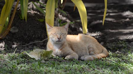 yelow : cat