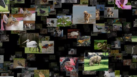 Photo stream of animals seamless loop