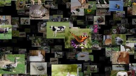 Photo stream of animals moving RIGHT, seamless loop
