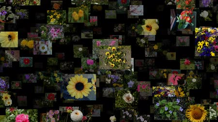 prezentaci : Photo stream of flowers moving DOWN, seamless loop