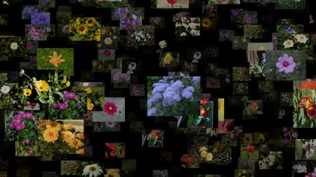 maceška : Photo stream of flowers moving RIGHT, seamless loop Dostupné videozáznamy