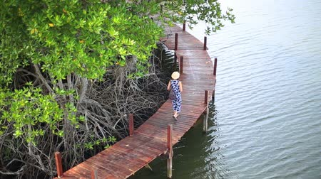 gyertyafa : Woman walking on wooden bridge in Mangrove forest, Thailand