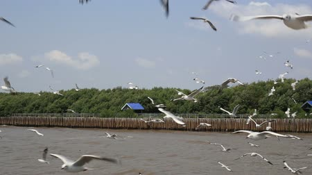 samut : Seagulls flying at Bang Pu in Samut Prakan ,Thailand. Stock Footage