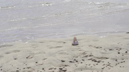 csibész : shell on the beach slow motion