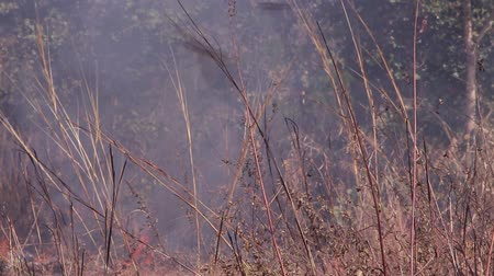devastated : fire burning forest, nature ash Stock Footage
