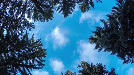 Rotation of the camera in the pine forest, video of floating clouds, hyperlamps Stock Footage