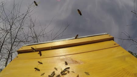 Bees fly near the hive against the blue sky. Slow motion. 30 frames per second Stock Footage