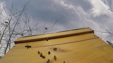 Bees fly near the hive against the blue sky. 60 frames per second Stock Footage