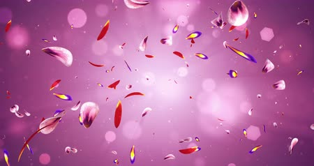 pétala : Composition of romantic flying red pink purple yellow sakura flower petals backdrop. Ideal for St. Valentines Day, Mothers Day, wedding anniversary greeting cards or wedding invitations. Can be used for a birthday e-card and other special occasions. Sea Vídeos