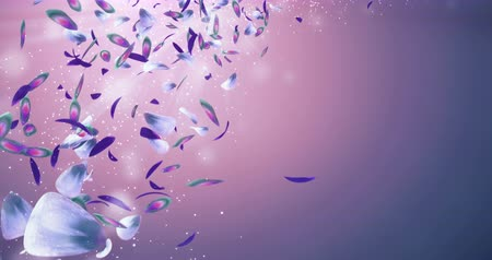 pétala : Animation of romantic flying purple green blue orchid flower petals with place for text backdrop. Ideal for St. Valentines Day, Mothers Day, wedding anniversary greeting cards or wedding invitations. Can be used for a birthday e-card and other special o Vídeos