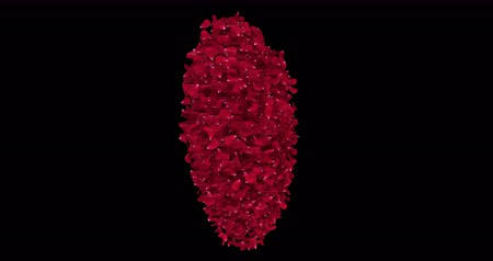pétala : Animation of rotating red rose sakura flower petals in shape of a heart with alpha matte. For St. Valentines Day, Mothers Day, wedding anniversary greeting cards, wedding invitation or birthday e-card. Seamless loop 4k