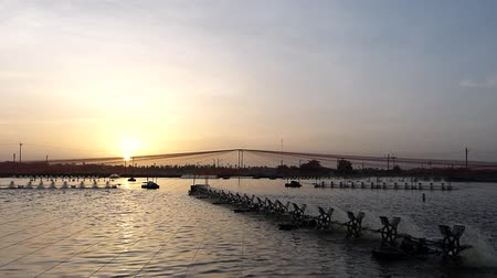 câmara : In evening sunset time at shrimps pond paddle wheel aerator are running