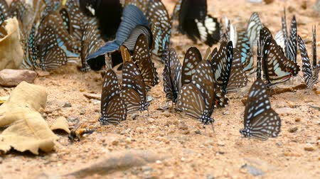 Group of butterflies on the ground in forest