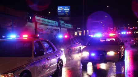 мигающий : Sea of red and blue police lights Multiple police cruisers parked at night in a street in the rain with flashing lights.
