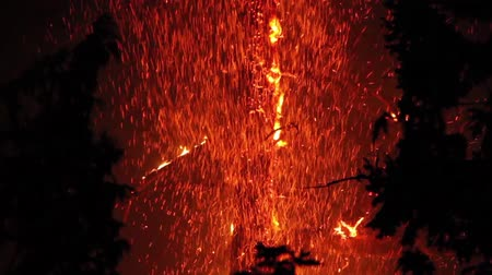 bush fire : Tree involved in fire at night with flames and sparkles  - Commercial license no logo no face Stock Footage