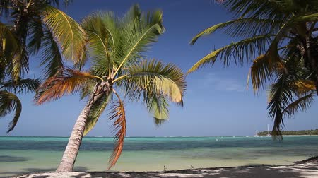 caraibes : Paradis tropical, images