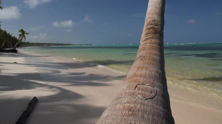 dominikana : Caribbean beach with beautiful palm with cutted heart on it, footage