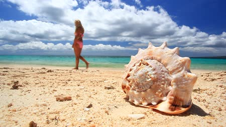 areias : Seashell on tropical beach