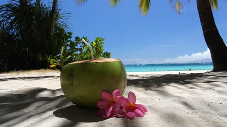 dominikana : Fresh green coconut on tropical beach with white sand Wideo