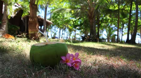 dominikana : Fresh green coconut on grass Wideo