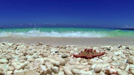 dominikana : Starfish on tropical beach, footage