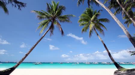 hawaii : Tropical beach with two coconut palm and white sand, Philippines, Boracay Island