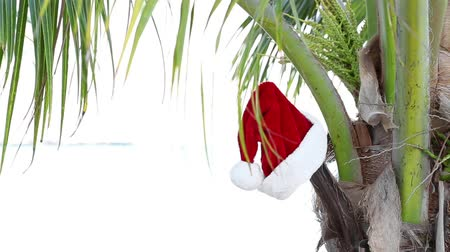 ünnepies : Santa Claus Hat on coconut palm tree. Holiday concept Stock mozgókép