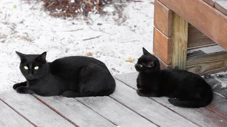 lying cat : Father and son cats outdoor