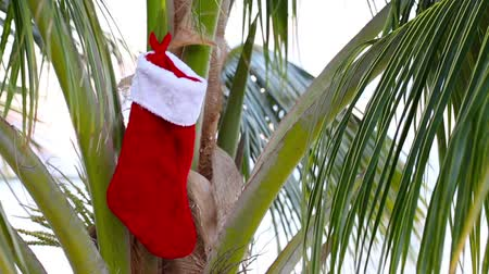 ünnepies : Christmas sock on coconut palm tree. Holiday concept