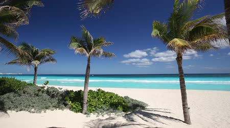 beach panorama : Tropical beach with coconut palm trees and white sand on caribbean coastline Stock Footage