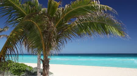 beach panorama : Tropical beach with coconut palm tree and white sand on caribbean coastline