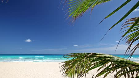 пальмовые деревья : Tropical beach with coconut palm tree and white sand on caribbean coastline