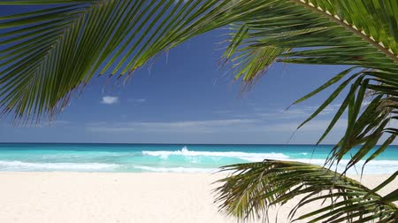coconut palm tree : Tropical beach with coconut palm tree and white sand on caribbean coastline