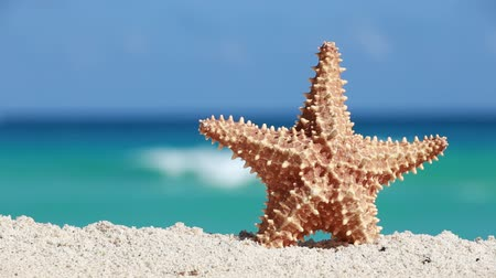tourism : Starfish on caribbean sandy beach, travel concept Stock Footage