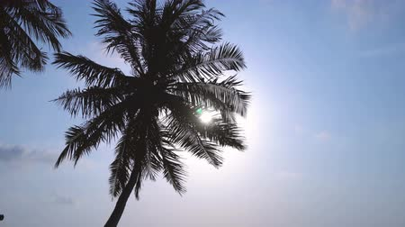 maldivas : Sunset with coconut palm tree leaf silhouette