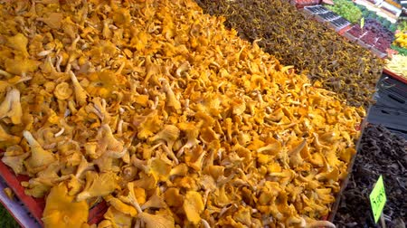 gombák : Fresh Chanterelle Mushrooms on farms market