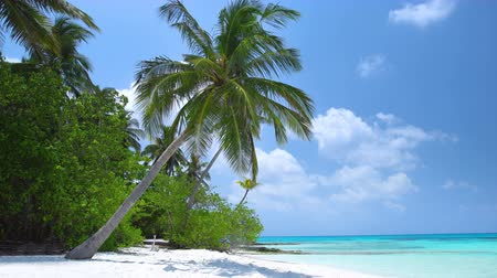 waterline : Tropical beach with coconut palm trees