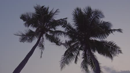 Канкун : Sunset through coconut palm tree leaf silhouette Стоковые видеозаписи