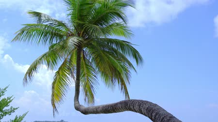 Канкун : Tropical view with top of coconut palm tree on blue sky background