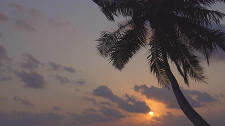 Канкун : Sunset with palm tree silhouette