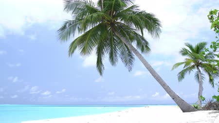 waterline : Coconut palm tree on tropical seashore