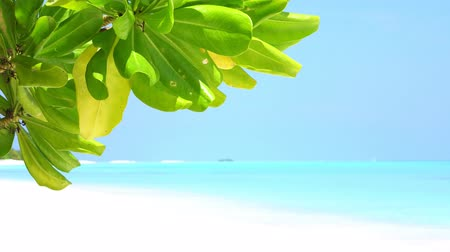 magnólia növény : Green leaf at the beach on Maldives island