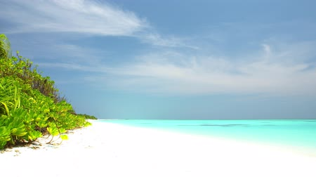 magnólia növény : Tropical beach on Maldives island
